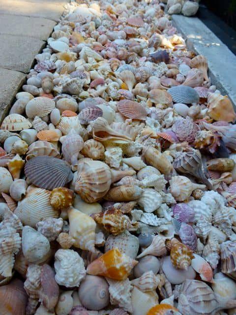 sea shell edging ideas