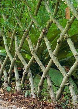 woven tree edging idea
