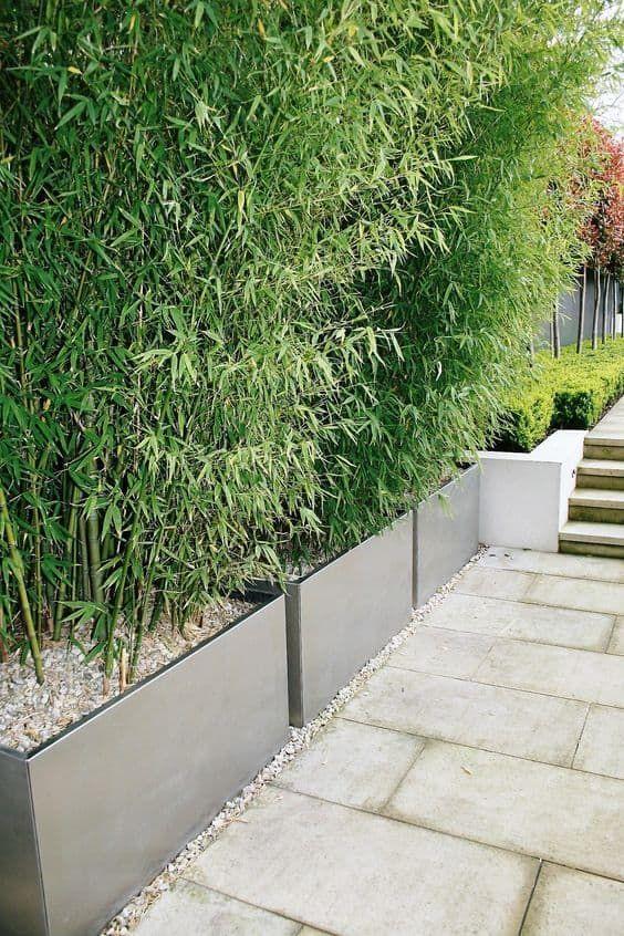 bambú en jardineras