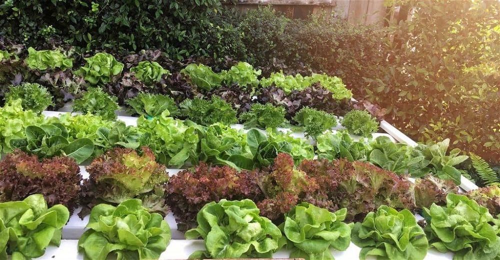 garden-hydroponics
