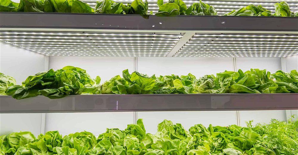 hydroponics-herbs
