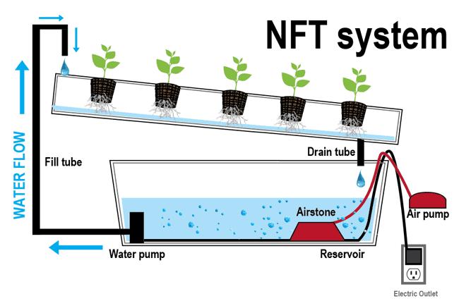nutrient film technique