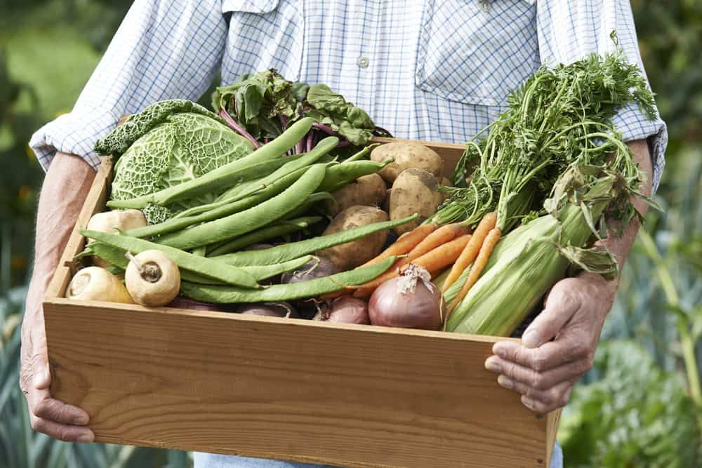 allotment vegetables