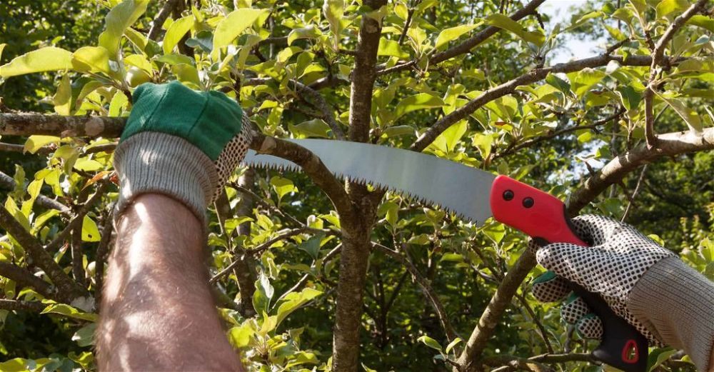 best-pruning-saw