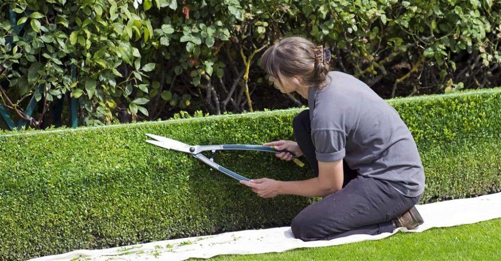 garden-shears