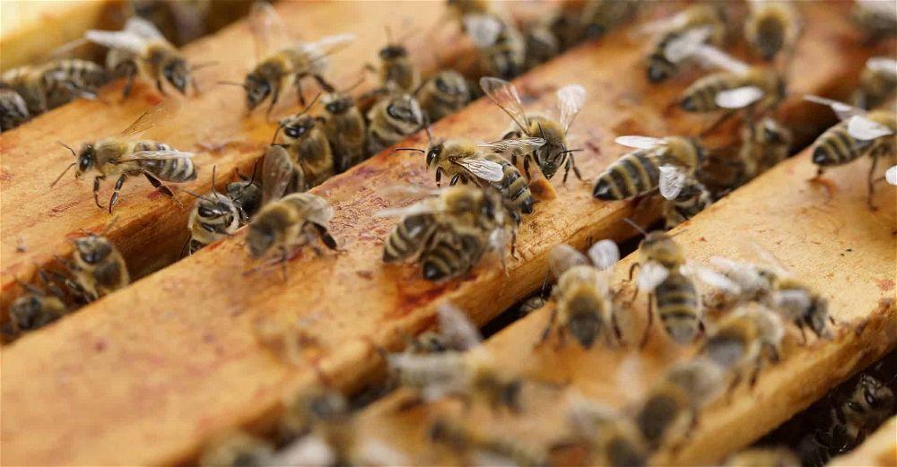 best bee hive
