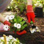 best-garden-kneeler