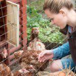automatic-chicken-coop-door