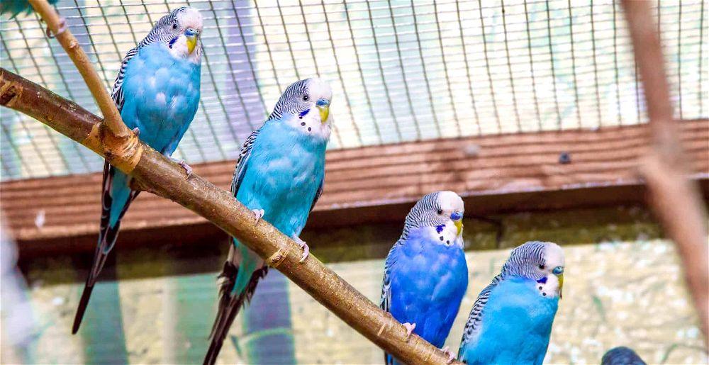 best-bird-avairy