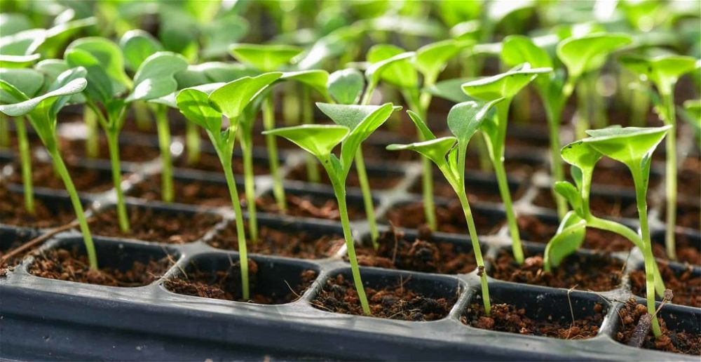 best-seed-trays