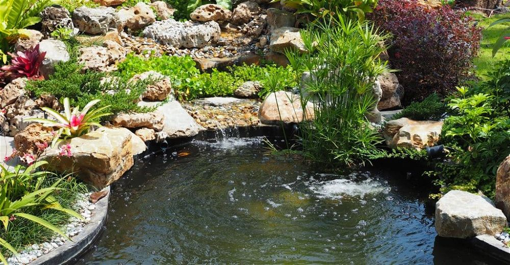 pond water treatment