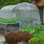 best-polytunnel-for-an-allotment
