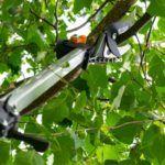 best-telescopic-tree-pruner
