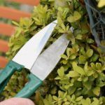 best-topiary-shears