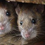 best-ultrasonic-mouse-repellent