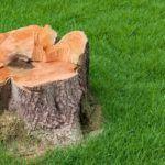 best-tree-stump-killer