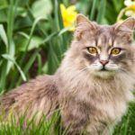 best-cat-repellent