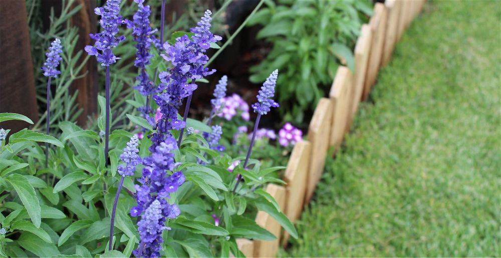 garden-border