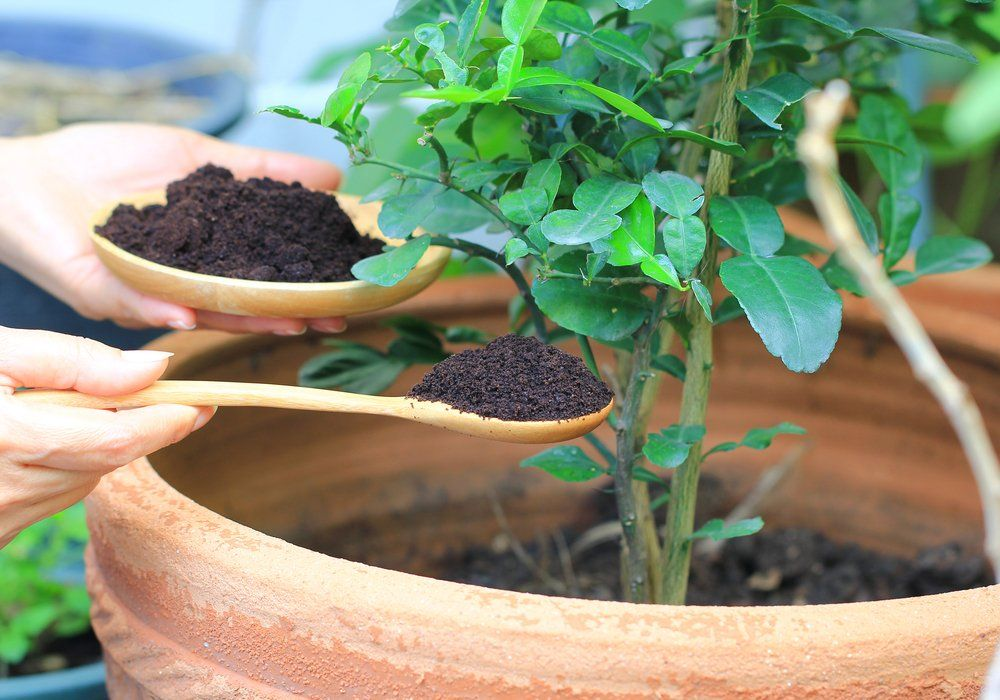 improving-soil-using-coffee-grounds