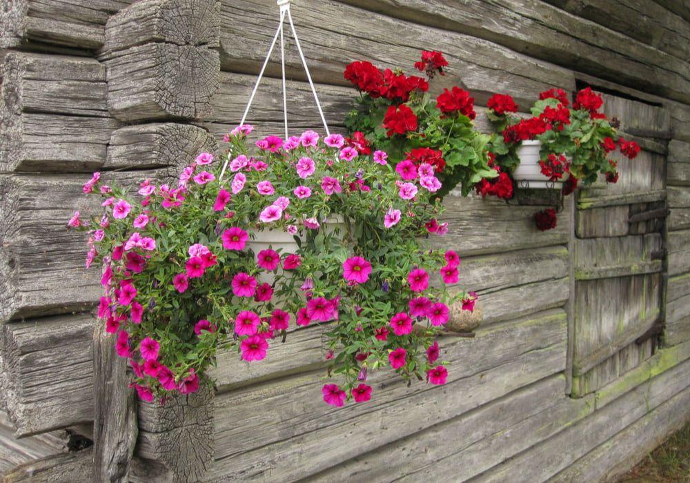 planting-hanging-baskets