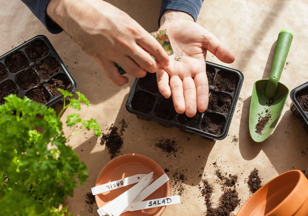 planting-in-containers