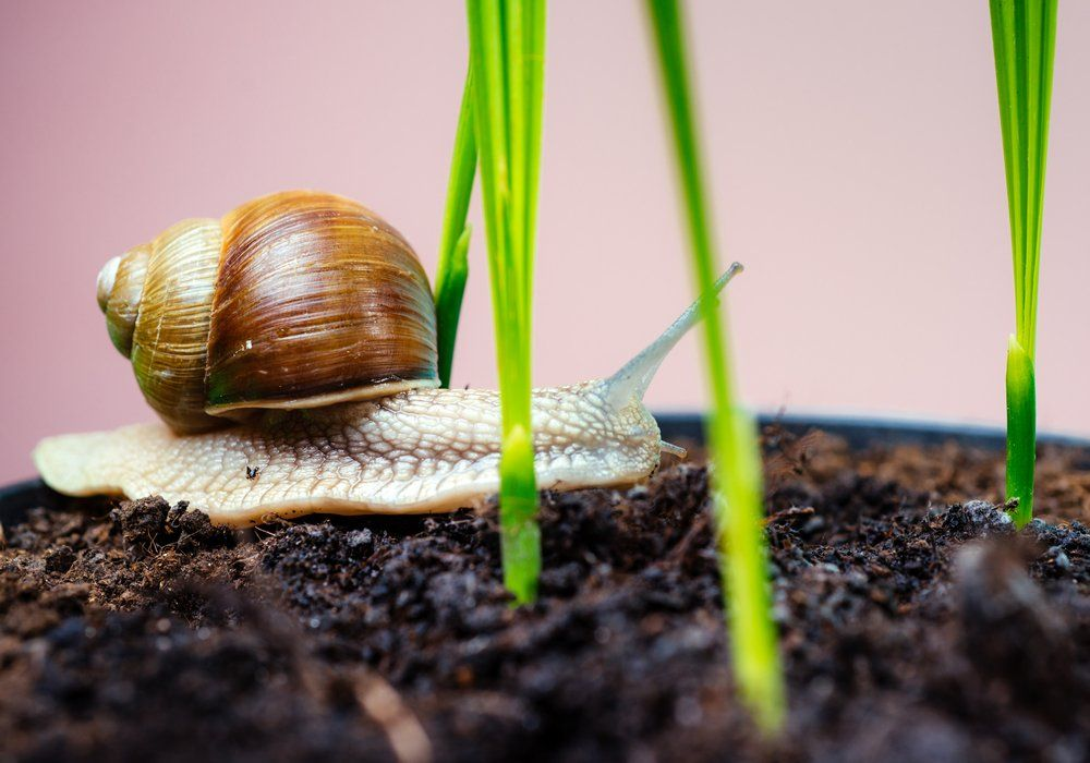 snails-on-coffee-ground