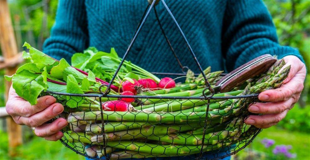 best-gardeners-knife