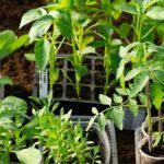 best-peat-free-compost