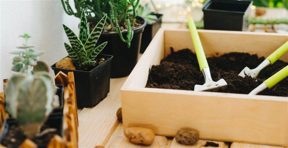 best-soil-for-cactus