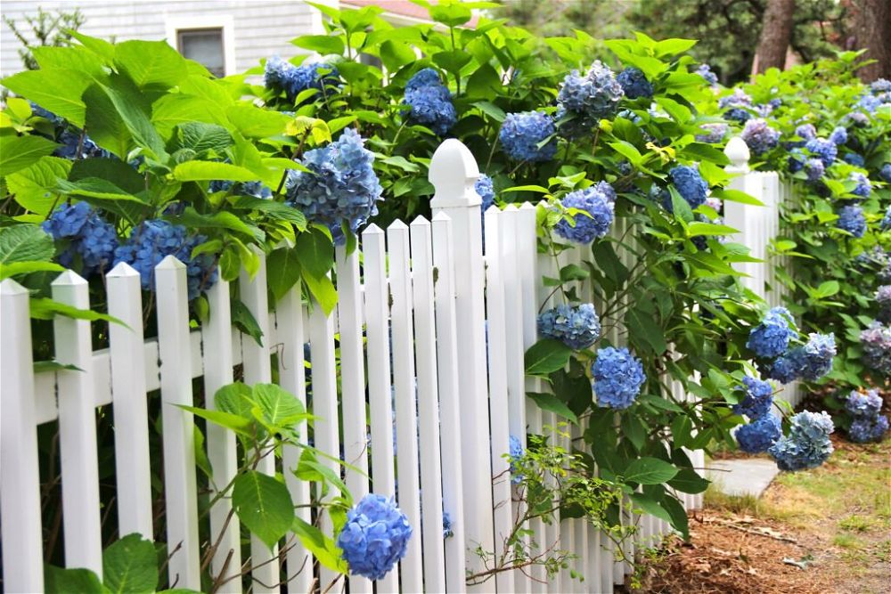 1. Front Garden Fence
