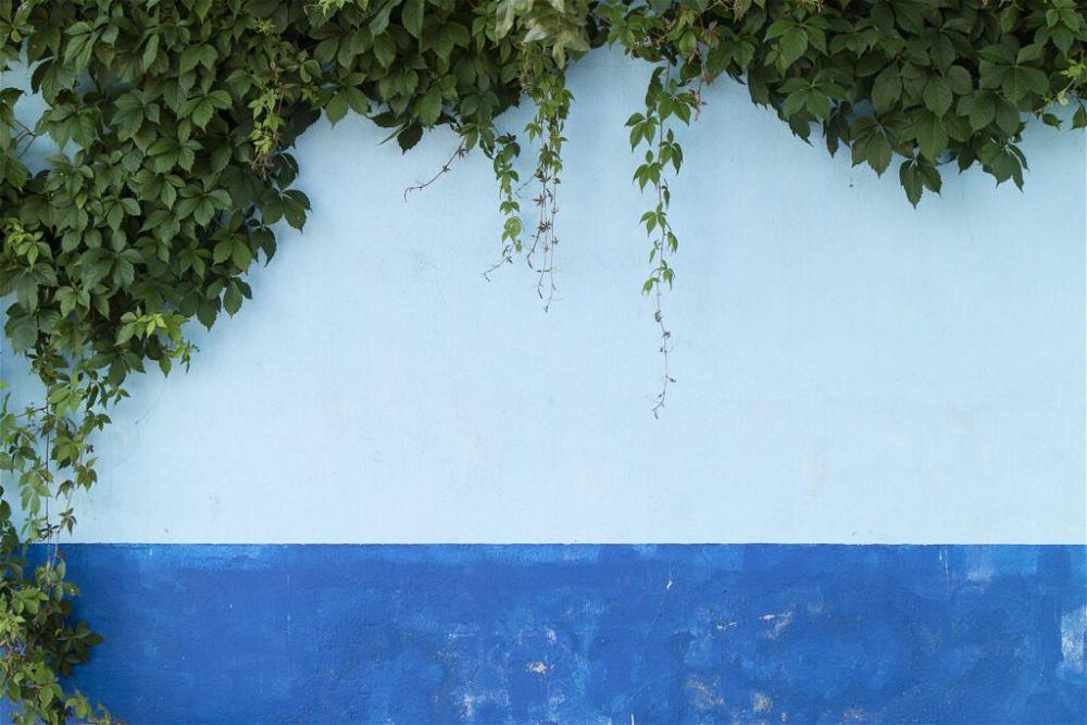 11. Garden Wall Paint