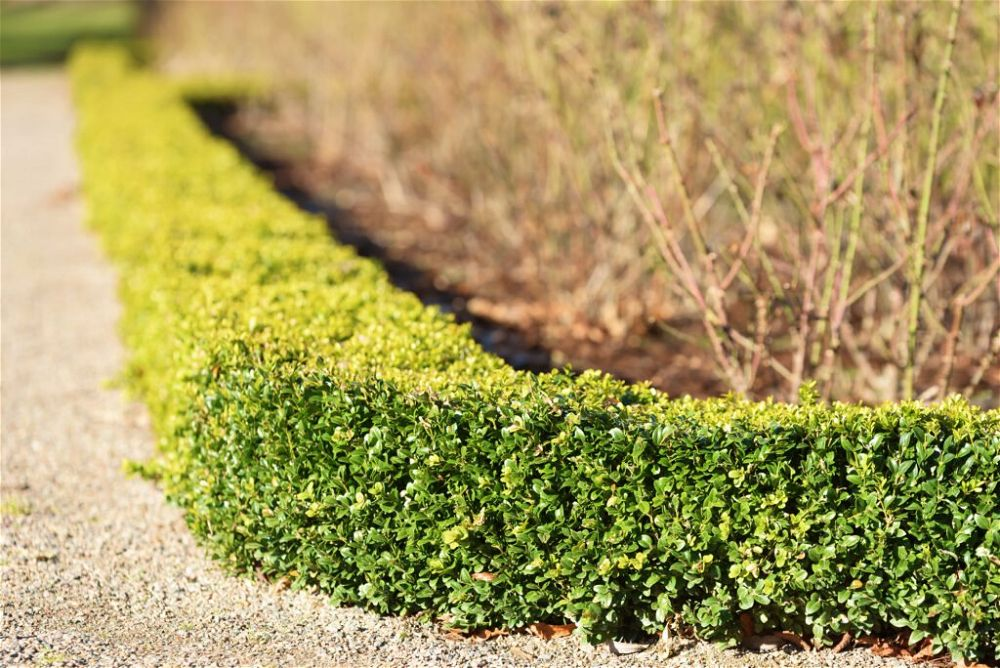 13. Low Garden Wall