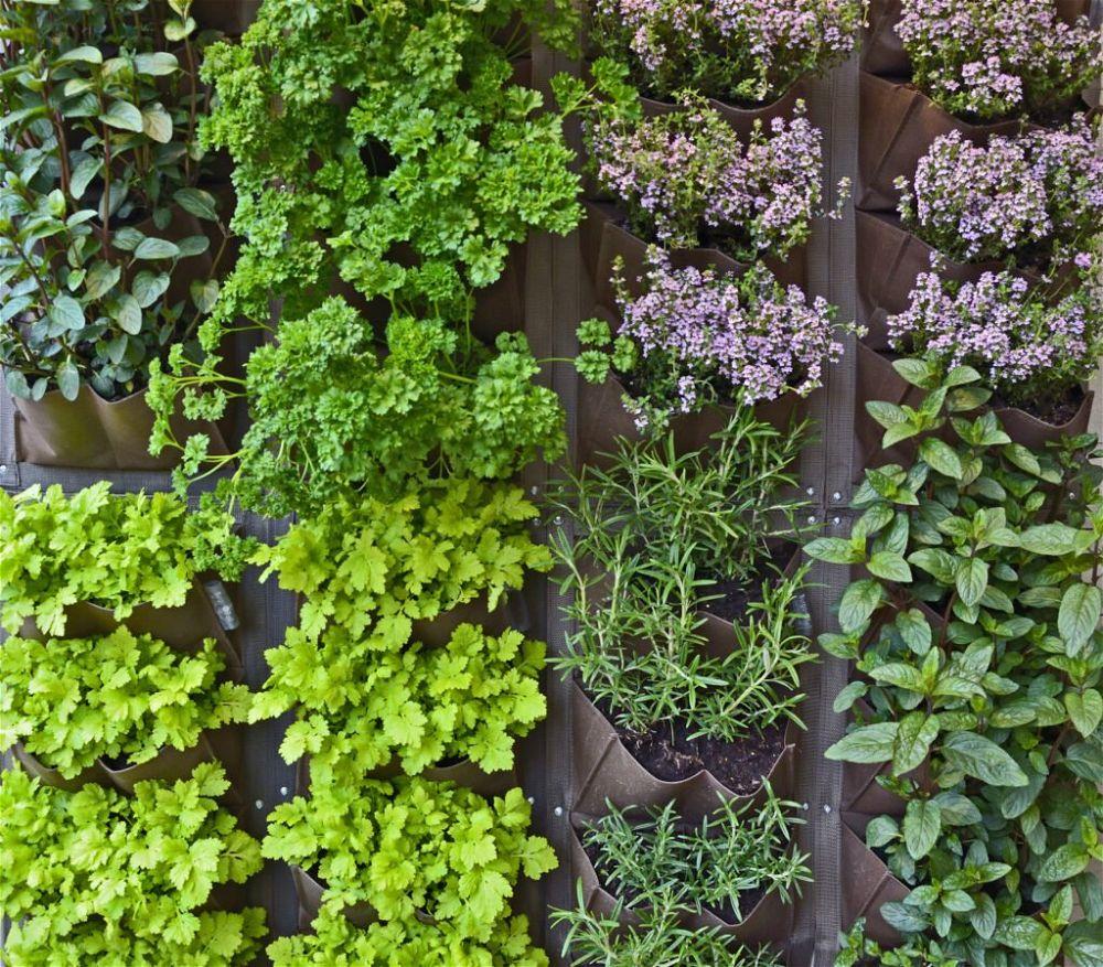 18. Patio Herb Garden
