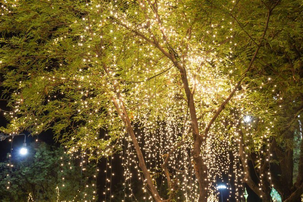 19. Garden Tree Lighting