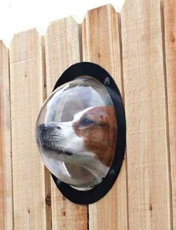 27. Garden Dog Fence