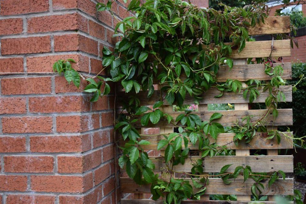 30. Pallet Garden Wall