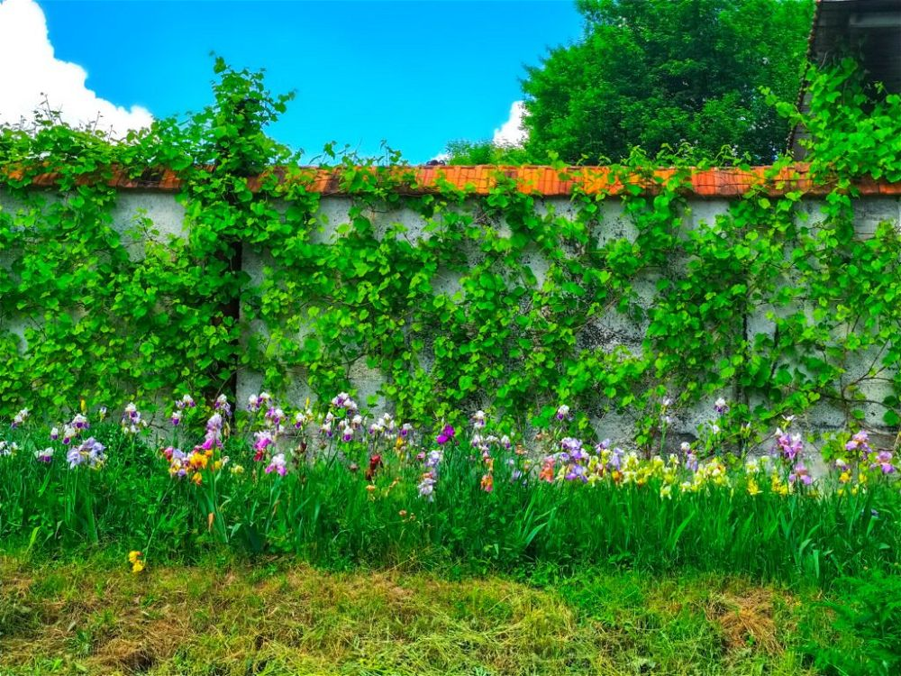 4. Garden Wall Covering