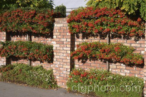 6. Garden Fence Security