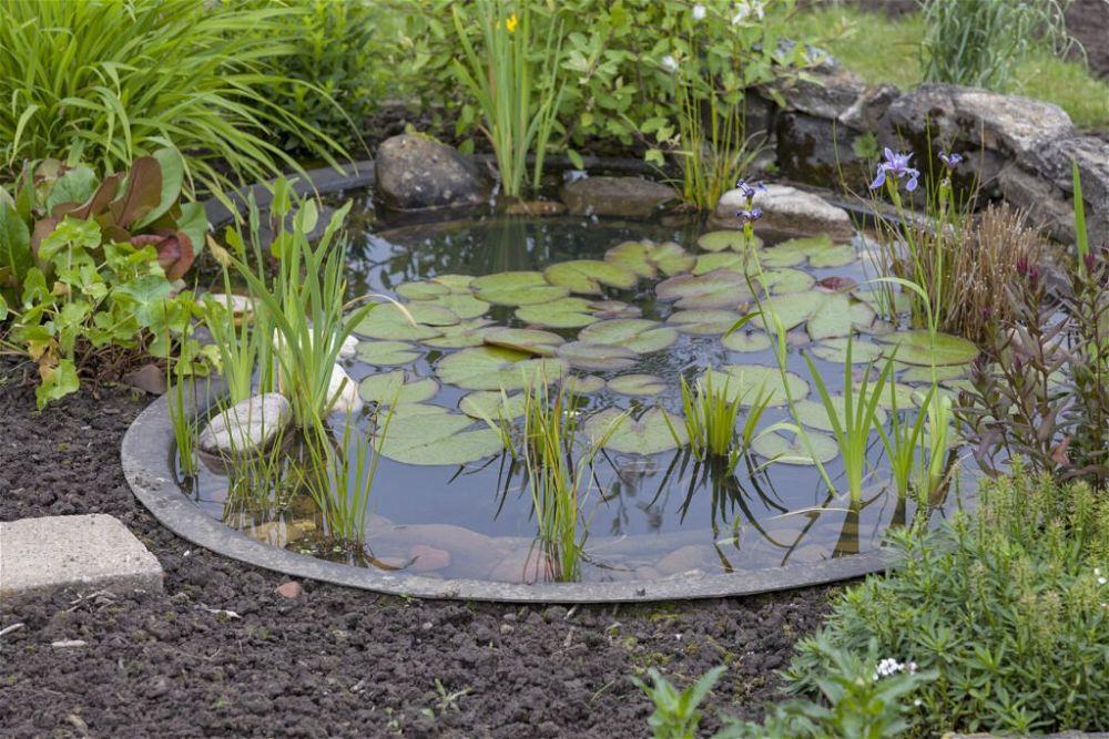 12. Plantación de estanques de jardín