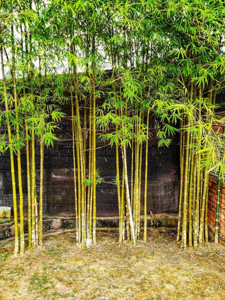 12. Plantas de jardín japonesas