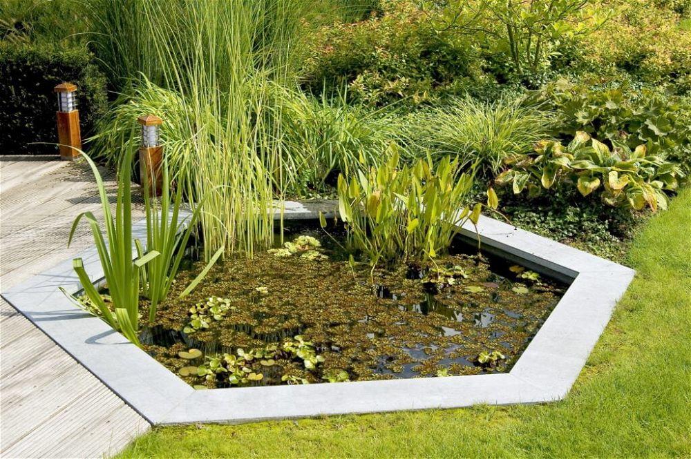 15. Paisajismo de estanques de jardín