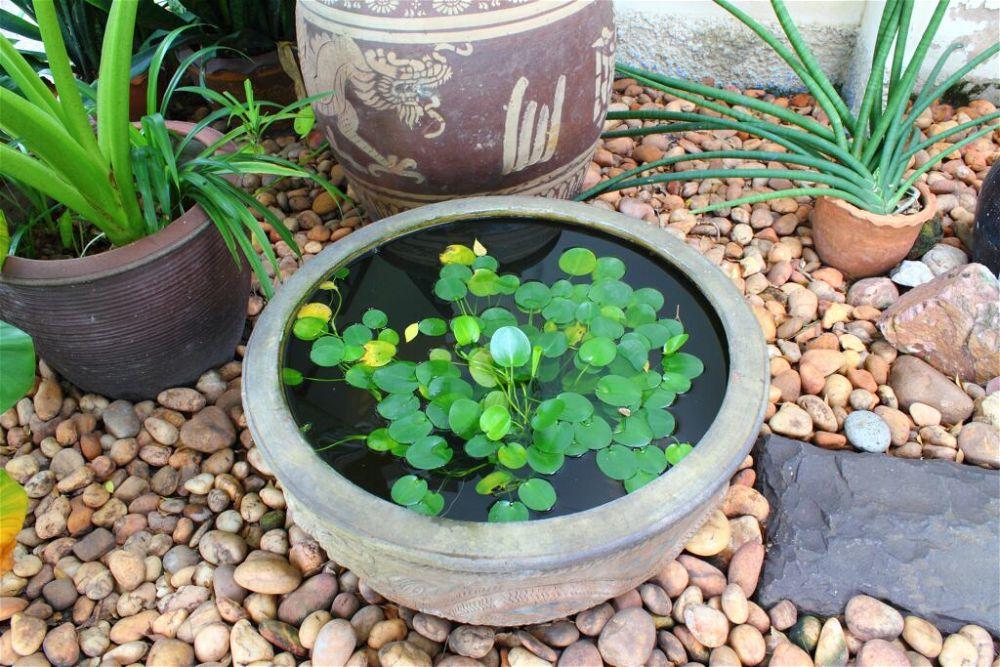 2. Estanque de jardín pequeño