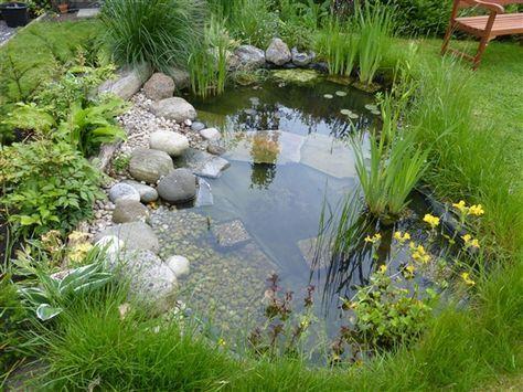 22. Fauna natural del estanque de jardín