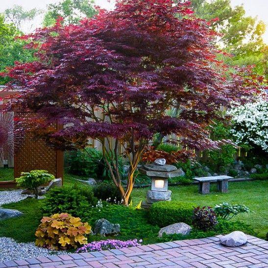 22. Jardín de arce japonés