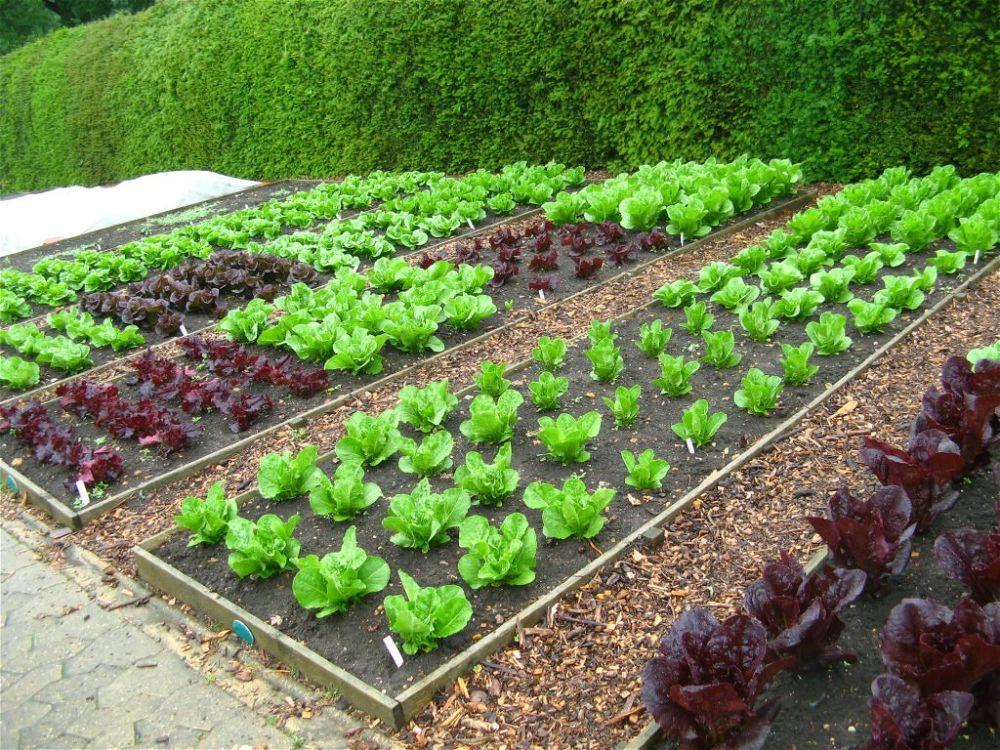 24. Vegetable Garden Path