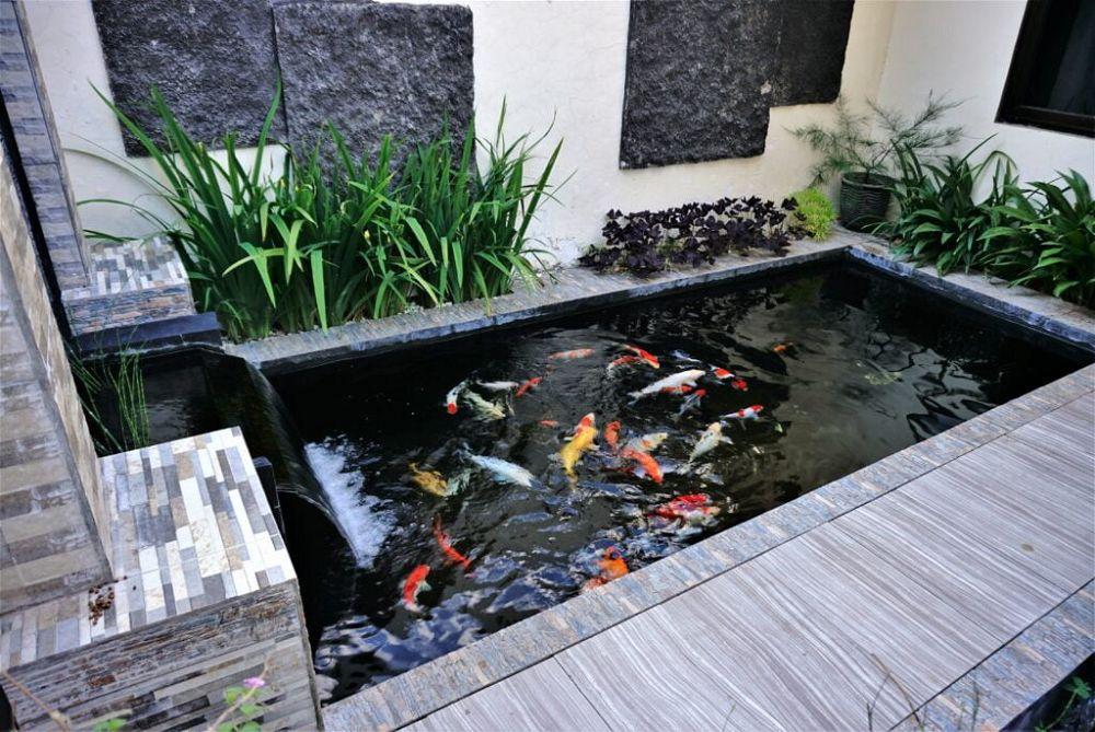 7. estanque de peces de jardín