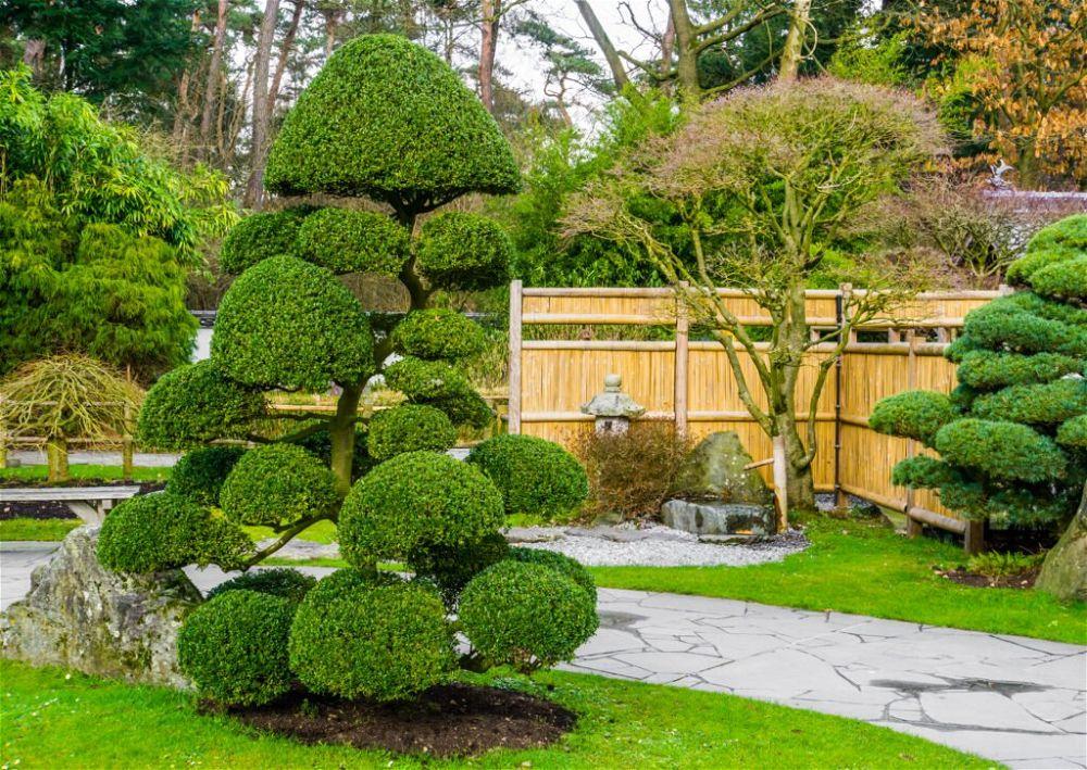 7. Plantación de jardines japoneses