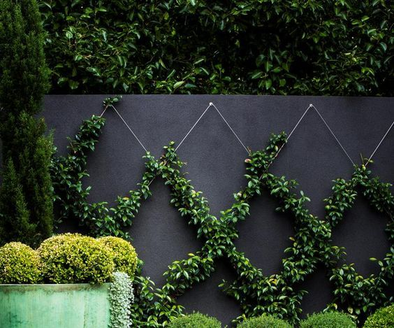 10. Back Garden Wall