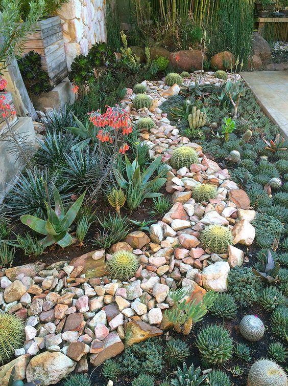 14. Cactus Garden Landscaping