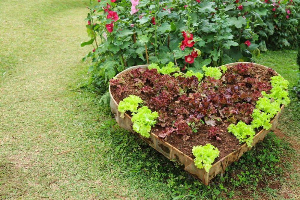 4. Simple Garden ideas on a Budget